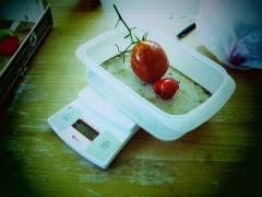 utilisation d'une balance electronique pour peser les tomatesit.JPG